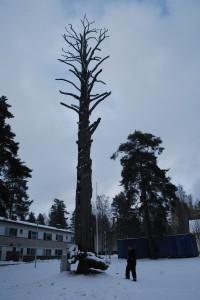 Satupuu