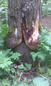 tissipuu